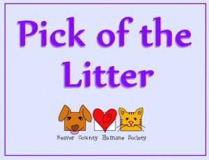 pick of the litter banner logo 4-3-14